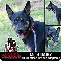 Adopt A Pet :: Daisy - Pottstown, PA