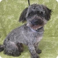 Adopt A Pet :: Darwin - Los Angeles, CA