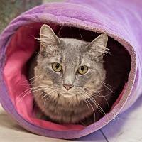 Adopt A Pet :: Fiona - Dallas, TX