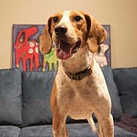 Adopt A Pet :: Surry - Staunton, VA