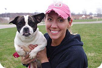 French Bulldog Mix Dog for adoption in Elyria, Ohio - Ellie Mae