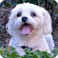 Adopt A Pet :: Casey - Morristown, NJ