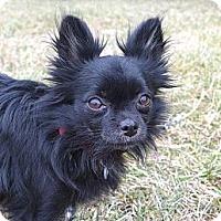 Adopt A Pet :: Clara - Mocksville, NC