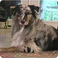 Adopt A Pet :: Min Min - Orlando, FL
