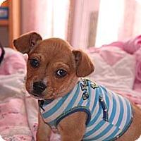 Adopt A Pet :: Kringle - Vidor, TX