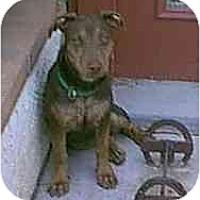 Adopt A Pet :: Roca - dewey, AZ