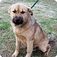 Adopt A Pet :: Jasper - courtesy post - Glastonbury, CT