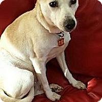 Adopt A Pet :: Princess - Hilliard, OH