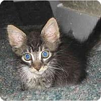 Adopt A Pet :: Eloise - Davis, CA