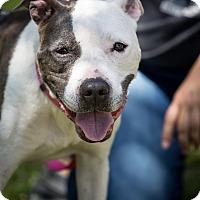 Adopt A Pet :: Nina - Orlando, FL