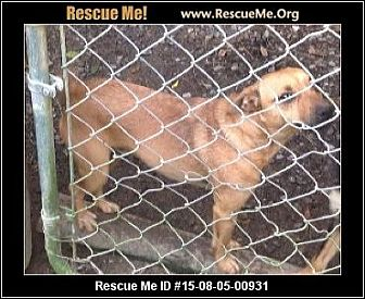 Chihuahua Mix Dog for adoption in Staunton, Virginia - Pup