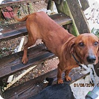 Adopt A Pet :: LUCY - Lincolndale, NY