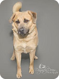 Labrador Retriever Mix Dog for adoption in Waynesboro, Pennsylvania - Teddy