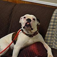 Adopt A Pet :: Thena - Cambridge, MD