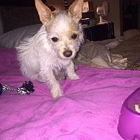 Adopt A Pet :: Gracie - Livermore, CA