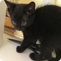 Adopt A Pet :: Asher - Riverside, CA