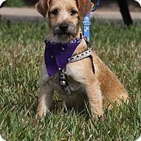 Adopt A Pet :: Aris - La Jolla, CA