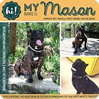 Adopt A Pet :: Mason - New Port Richey, FL