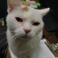 Adopt A Pet :: Mandy - Oshkosh, WI