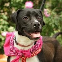 Adopt A Pet :: China - Amarillo, TX