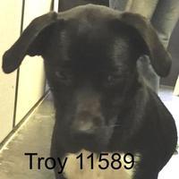 Labrador Retriever/Dalmatian Mix Dog for adoption in Manassas, Virginia - Troy