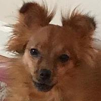 Adopt A Pet :: Eloa - Lexington, KY