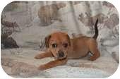 Beagle Mix Puppy for adoption in Davison, Michigan - Natalie