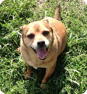 Miniature Pinscher/Terrier (Unknown Type, Medium) Mix Dog for adoption in Marion, Wisconsin - Winston
