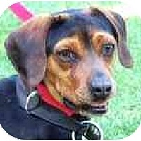 Adopt A Pet :: JOHN - Wakefield, RI