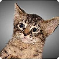 Adopt A Pet :: Connor - Montgomery, IL