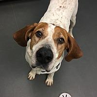 Adopt A Pet :: Judd - Grayslake, IL