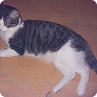 Adopt A Pet :: Jasper - Farmington, AR