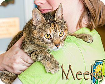 Domestic Shorthair Cat for adoption in Somerset, Pennsylvania - Meeka