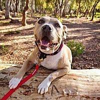 Adopt A Pet :: Ruthie - Riverside, CA