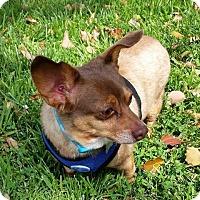 Adopt A Pet :: Elton John - Eugene, OR