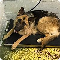Adopt A Pet :: Zada - Dacula, GA