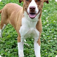Adopt A Pet :: Nikky - Waldorf, MD