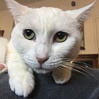Adopt A Pet :: Lily - Orange, CA