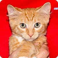 Adopt A Pet :: SEBASTIAN - Fernandina Beach, FL