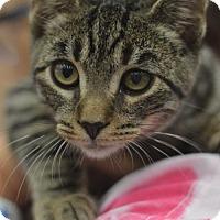 Adopt A Pet :: Elvis - Madison, NJ