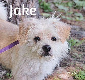 Terrier (Unknown Type, Small) Mix Dog for adoption in Pleasantville, New Jersey - Jake