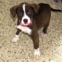 Adopt A Pet :: Kellie - Cedar Bluff, AL