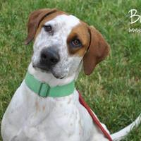 Adopt A Pet :: Buck - Cheyenne, WY