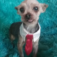 Adopt A Pet :: Max - Millersburg, OH
