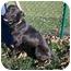 Photo 4 - Labrador Retriever Mix Dog for adoption in Greensburg, Pennsylvania - Sammy