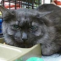 Adopt A Pet :: Marta - College Station, TX