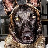 Adopt A Pet :: Winston in CA - Jamestown, CA