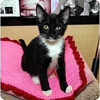 Adopt A Pet :: Riley - Farmingdale, NY