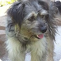Adopt A Pet :: AXEL - Mission Viejo, CA
