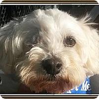 Adopt A Pet :: Oscar - Playa Del Rey, CA